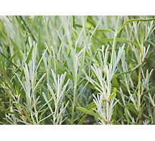 THE BEAUTY OF PLANTS Photographic Print