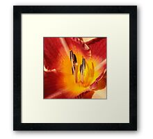 On Fire In The Morning Framed Print