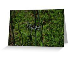 Dragonfly #4 - V1 Greeting Card