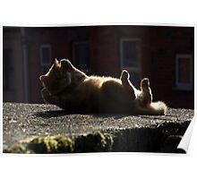 Cat aerobics Poster