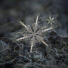 Stars in my pocket like grains of sand - grey version by Alexey Kljatov