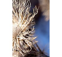 Closeup of brown thistles in a snowy field abstract detail Photographic Print