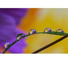 A few drops Photographic Print