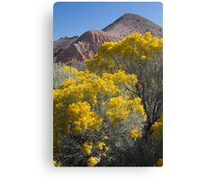 Blooming Sage Canvas Print
