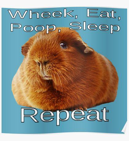 Wheek Eat Poop Sleep Repeat Poster