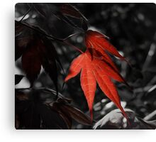 Clinging On To Colour Canvas Print