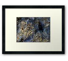 Dark Protector (Orbicular Ocean Jasper) Framed Print