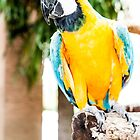 Polly Wants A Cracker by Claudia Heidelberger