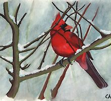 Winter Cardinal by outofthedust