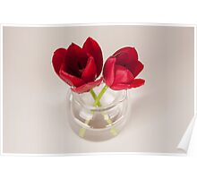 Red tulip still life Poster