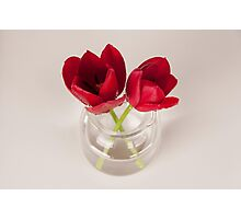 Red tulip still life Photographic Print