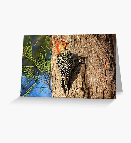 Red-headed Beauty    Greeting Card