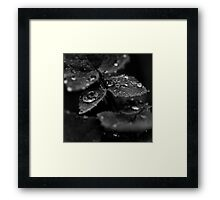 Quicksilver Droplets on Leaves Framed Print