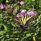 Butterfly and Flower Close-Up, Santa Fe, New Mexico by lenspiro