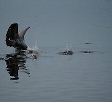 Pelican Dive by Scott Dovey