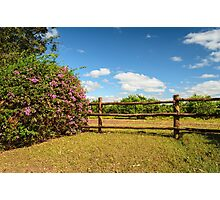 wooden fence Photographic Print