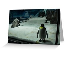Penguin Portrait Greeting Card