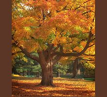 Autumn Colours 2 - MacKenzie-King Estate by Yannik Hay