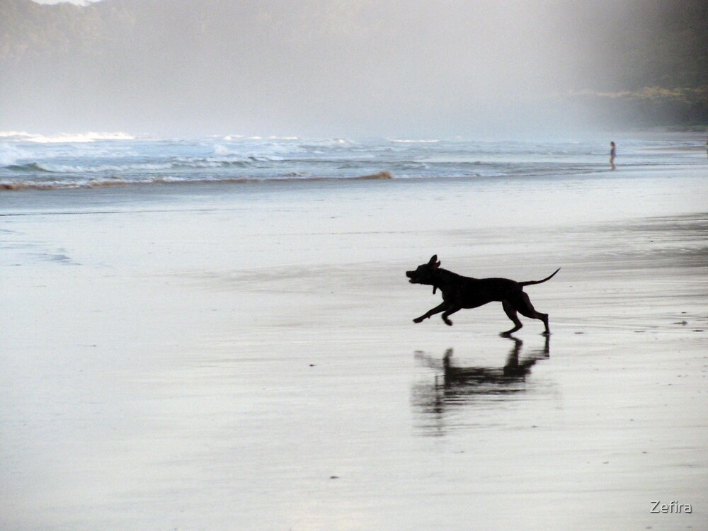 black dog by Zefira