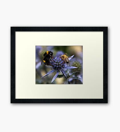 Bumble Bee & The Wasp Framed Print
