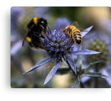 Bumble Bee & The Wasp Canvas Print