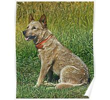 Red-ticked Heeler dog painting Poster