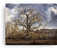landscape large tree with cloudy sky Canvas Print