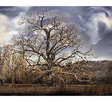landscape large tree with cloudy sky Photographic Print