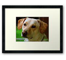Molly Dog Framed Print