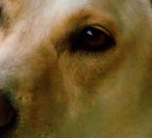 Molly Dog Sticker