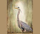 Great Blue Heron by Yannik Hay