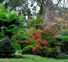 Wildenstein - Mt Wilson NSW by Bev Woodman