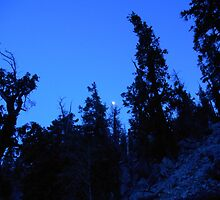 Moonlit Hike by mystical67
