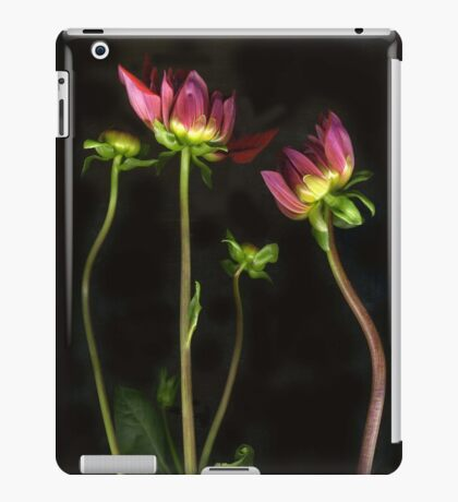Dahlias~Three Stems iPad Case/Skin