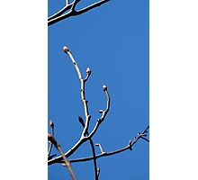Branching Out Photographic Print