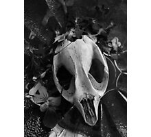 skull and flowers again  Photographic Print