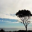 Tree Silhouette against the Sea by Judi Rustage