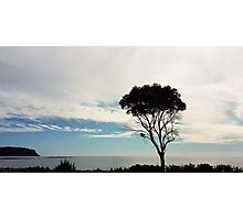 Tree Silhouette against the Sea Photographic Print