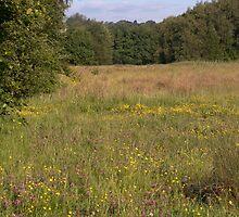 Summer Meadow by John Morris