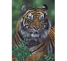 Eye of the Tiger by Karie-Ann Cooper Photographic Print