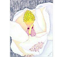 Il Fiore Bianco Photographic Print