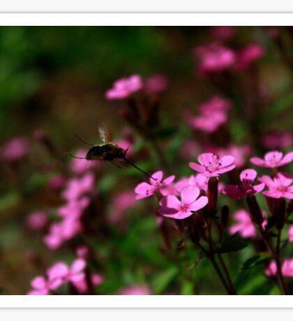 Nectar Sucking Sticker