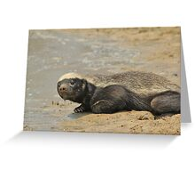 Honey Badger -  Greeting Card