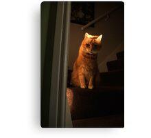 Waiting cat Canvas Print