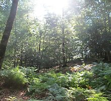 Forest 4 by Furiarossa