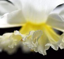 It's Spring Daffodil Sticker