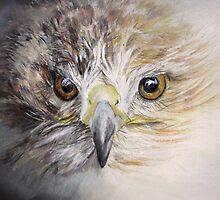 Fledgling Hawk by Linda Woodward