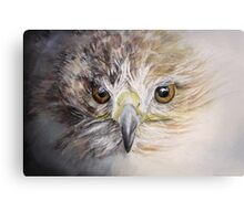 Fledgling Hawk Canvas Print