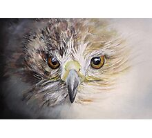 Fledgling Hawk Photographic Print