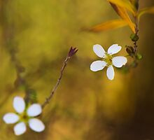 Blossom and Bokeh by Nicole Bechaz